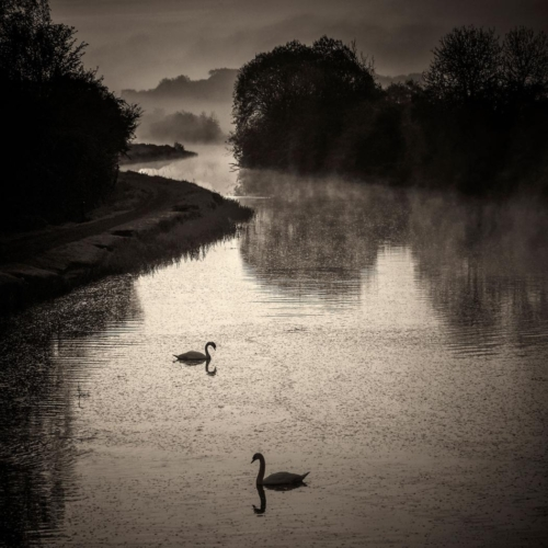 Forth  Clyde Swans, David Mould