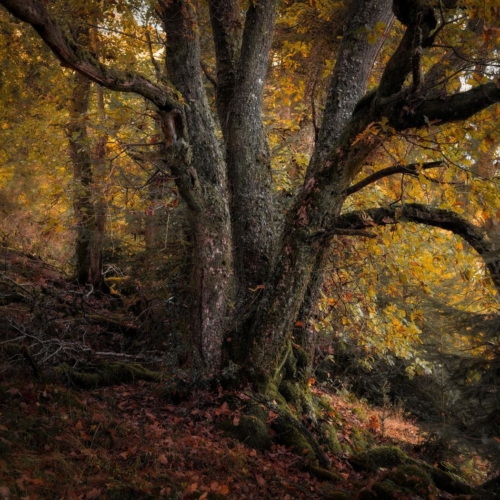 Shades of Autumn, Gavin Duncan