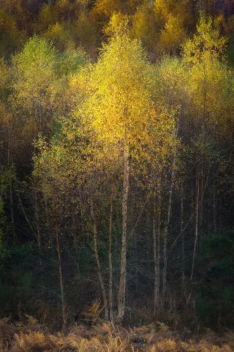 Throes of Autumn, Stuart Lamont